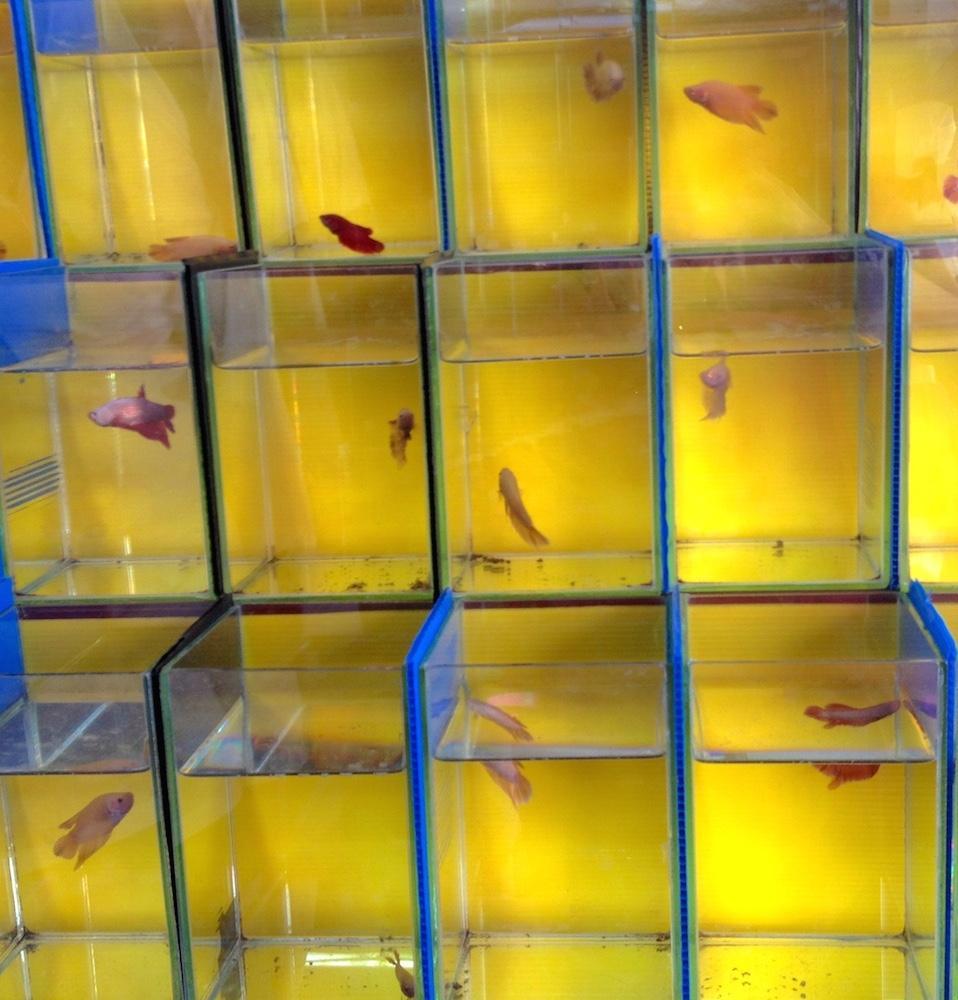 Aquarium jaune Bangkok