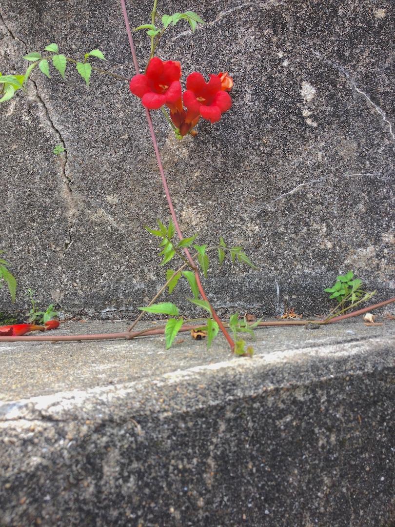 fleur_de_beton_voyage