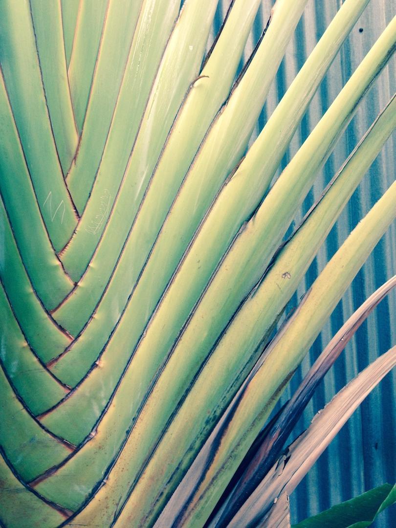 vegetation-tropicale-pastel-mexique-oaxaca-voyage